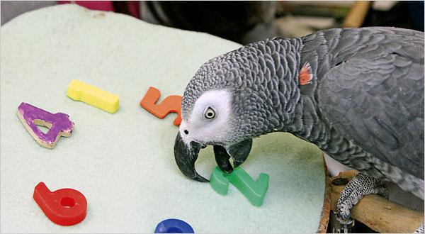 حیوانات باهوش که مسائل را حل میکنند!